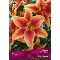 Лилия ОА гибрид Фёст Краун (Lilium OA hybrid First Crown)
