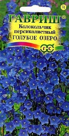Цветы кампанелла многолетний или однолетний